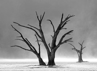 Deadvlei trees in sandstorm